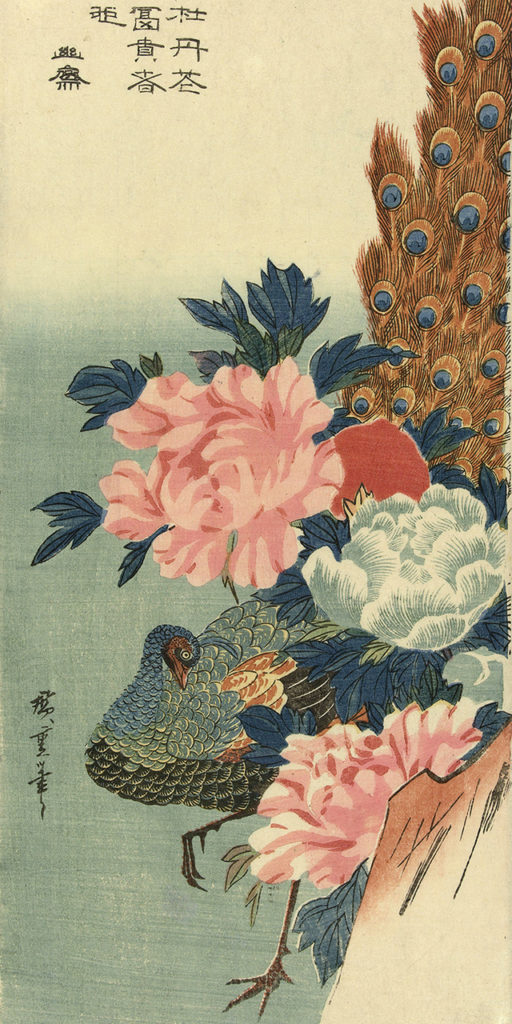 flower and peacock